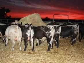 Kamarah 2015 Bulls Sunsetting Yards